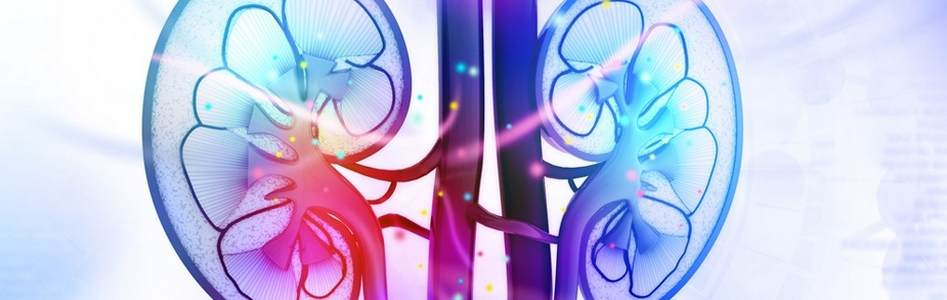 13 Nephrology-and-Urology Banner 925x300